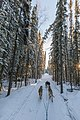 Dogsled, Four Mile Road.jpg
