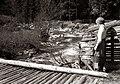 Dolina Bistre 1956.jpg
