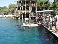 Dolphins on Eilat (2009).jpg