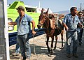 Donkey at the Harbor, Hydra Greece (9665636651).jpg