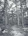 Dorr Woods - Old Bicycle Path - June 3, 1905 (d9ec6a9a0fd44676b9cd999067b08015).jpg