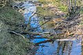Dourdou River in Nauviale 02.jpg