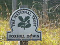 Dover Fox Hll Down0339.JPG