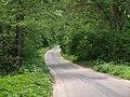 Droga w mierzwickim lesie - panoramio.jpg
