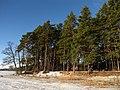 Druvciema piekraste - panoramio (2).jpg