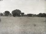 ETH-BIB-Zebras in der Serengeti-Kilimanjaroflug 1929-30-LBS MH02-07-0379.tif