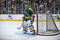 Edmonton Oilers Rookies vs UofA Golden Bears (15088792007).jpg