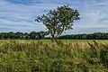 Eenzame boom in de lendevallei. Locatie, Stuttebosch in de lendevallei. Provincie Friesland 02.jpg