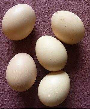 Silkie - Silkie eggs