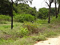 Electric fence for Elephants B-294 Sri Lanka.JPG