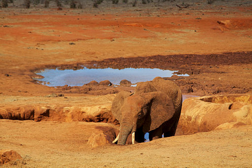 Elephants enjoying the mud and watering hole (5232722706)
