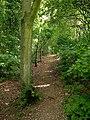 Elloughton Dale woodland footpath - geograph.org.uk - 1380881.jpg