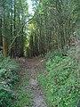 Entering Great Plantation - geograph.org.uk - 591088.jpg