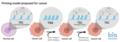 Epigenetic priming in Cancer.png