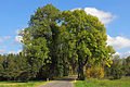 Eschenallee bei Rastbach 04 2014-10 NDM KR-085.jpg
