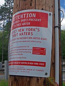A red and white sign on a telephone pole seen in closeup from one side. The text that is visible describes rock snot and advises anglers how to control it