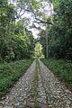 Estrada Real do Comercio na Reserva Biológica Federal do Tinguá.jpg