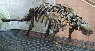 Timeline of ankylosaur research