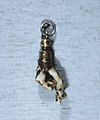 European - Teething (?) Amulet with White Coral - Walters 571992.jpg