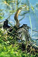 Everglades National Park EVER1496.jpg