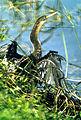 Everglades National Park EVER1496.jpg
