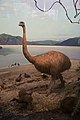 Extinct flightless bird (21128386393).jpg