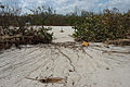 FEMA - 11477 - Photograph by Mark Wolfe taken on 09-29-2004 in Florida.jpg