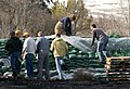 FEMA - 40621 - Covering a sand bag levee in North Dakota.jpg