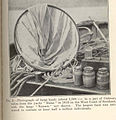 FMIB 36373 Photograph of large hauls (about 1,000 cc in a jar) of Calanus taken from the yacht 'Runa' in 1913 on the West Coast of Scotland.jpeg