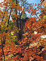 Fall Colors in West Fork - 2010 (5179040228).jpg