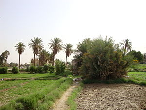 Farm - jahara city - kuwait.jpg