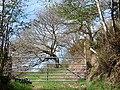 Farm gate at Nant y Glyn - geograph.org.uk - 787891.jpg