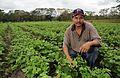 Farmer in bean field, Nicaragua.jpg