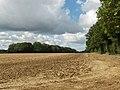 Farmland next to Peak's Copse - geograph.org.uk - 230135.jpg