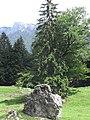 Felsen am Wegesrand bei der Eland-Alm - geo.hlipp.de - 15735.jpg