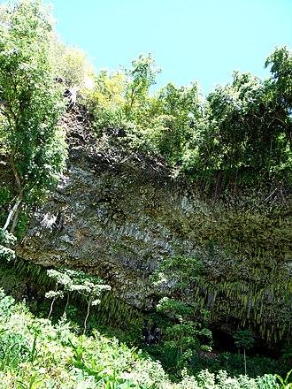 Fern Grotto - Fern Grotto