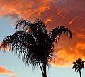 Firery Sunset Palms 12-25-15 (28893676010).jpg