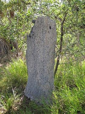 Flickr - brewbooks - Magnetic Termite mound - Litchfield National Park.jpg