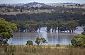Flood waters on the Murrumbidgee flood plains in Gobbagombalin, viewed from Rainbow Drive in Estella (1).jpg