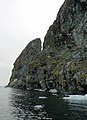 FloreAntarctique (3).jpg