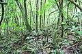 Floresta adentro - panoramio.jpg