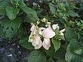 Flower..jpg