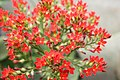 Flower - panoramio - sabareesh kkanan sub….jpg