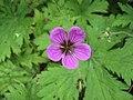 Flower Power ^1 - geograph.org.uk - 1467209.jpg