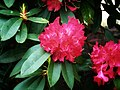 Flower photography - Photo by Giovanni Ussi 16.jpg