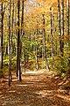 Flume Gorge Trail, Lincoln (494010) (11849315485).jpg