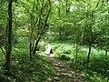 Footbridge in Furzefield Wood - geograph.org.uk - 1298424.jpg