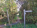 Footpath through the Llangoed Common Nature Reserve - geograph.org.uk - 1546479.jpg