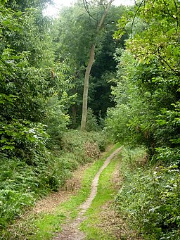 Footpath through trees - geograph.org.uk - 1432816