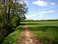 Footpath to Stratford from Snitterfield - geograph.org.uk - 1839817.jpg